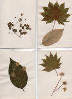 84Bv    Lot De 4 Fleurs Plantes Et Feuilles Séchées Seches à Identifier - Non Classificati