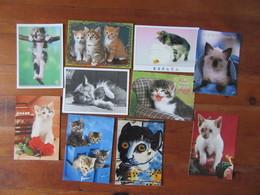 Lot De 10 Cartes De Chats - Cartes Postales