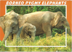 Borneo Pygmy Elephants,Malaysia, Postcard Addressed To ANDORRA,with Arrival Postmark - Éléphants