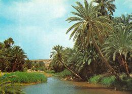 1 AK Algerien * Ansicht Einer Oase In Der Sahara * - Argelia
