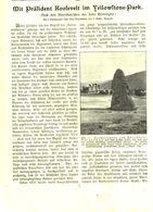 Mit Präsident Roosevelt Im Yellowstone Park /Druck, Entnommen Aus Kalender /1909 - Books, Magazines, Comics
