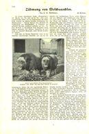 Zähmung Von Moschusochsen / Artikel, Entnommen Aus Kalender /1909 - Books, Magazines, Comics