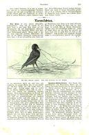 Der Star / Artikel, Entnommen Aus Kalender /1909 - Books, Magazines, Comics