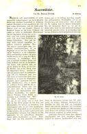 Auenwälder / Artikel, Entnommen Aus Kalender /1909 - Books, Magazines, Comics