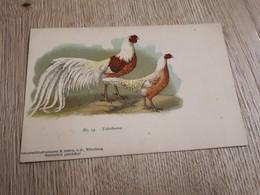Postcard - Birds      (26526) - Oiseaux