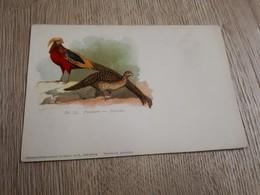Postcard - Birds      (26528) - Oiseaux