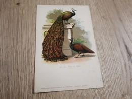Postcard - Birds      (26529) - Oiseaux