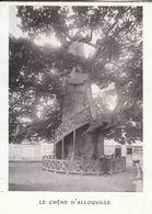 1907 - Iconographie - Allouville-Bellefosse (Seine-Maritime) - Le Chêne - FRANCO DE PORT - Vieux Papiers