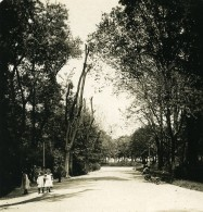 Italie Milan Jardin Public Ancienne Photo Stereo NPG 1900 - Stereoscopic