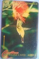 230CDMB Humming Bird - Dominica