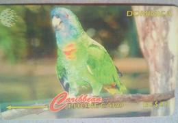 225CDMA Jaco Parrot - Dominica