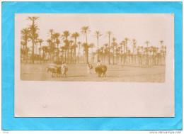 TRIPOLI DE BARBARIE--carte Photo-paysans Et Leurs Mules-années 1900 - Libya