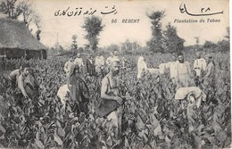 CPA - Iran / Persia,  RESCHT, Plantation De Tabac - Iran