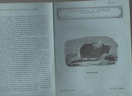 Couverture Illustrée De Cahier D'écolier : Encyclopédie De L'enfance N° 70: Yack Sauvage  (PPP8212) - Animaux