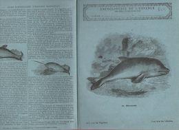 Couverture Illustrée De Cahier D'écolier : Encyclopédie De L'enfance N° 78:le Marsouin (PPP8213) - Animals