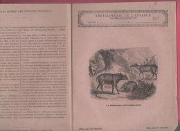 Couverture Illustrée De Cahier D'écolier : Encyclopédie De L'enfance N°40 Le Babiroussa Ou Cochon Cerf (PPP8215) - Animals
