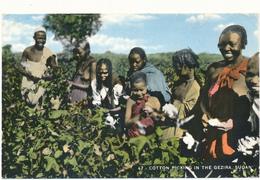SUDAN - Cotton Picking In The Gezira - Sudan