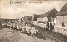 Cpa Animée De La Beauce (28), Ferme De Theuvy, éd. Gadau 2, Moutons Sur La Route - France