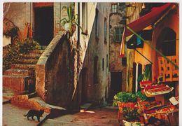 26520 Cote D'azur Miracle Nature -Cagnes Mer -vieille Rue -ed EKB 645-301-06 -Yvon -commerce Fruits Legumes -chat - Cagnes-sur-Mer
