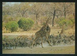 *In The Kruger National Park* Ed. Satour. Nueva. - Sudáfrica
