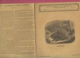 Couverture Illustrée De Cahier D'écolier : Encyclopédie De L'enfance N°28 Le Porc épic (PPP8217) - Animaux