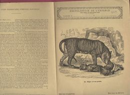 Couverture Illustrée De Cahier D'écolier : Encyclopédie De L'enfance N°8 Le Tigre Et Ses Petits  (PPP8219) - Animaux