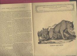 Couverture Illustrée De Cahier D'écolier : Encyclopédie De L'enfance N°6 La Lionne Et Ses Lionceaux  (PPP8220) - Animals