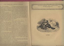 Couverture Illustrée De Cahier D'écolier : Encyclopédie De L'enfance N°5 La Martre (PPP8221) - Animaux