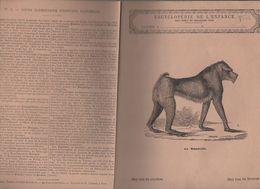 Couverture Illustrée De Cahier D'écolier : Encyclopédie De L'enfance N°4 : Le Mandrille  (PPP8222) - Animaux