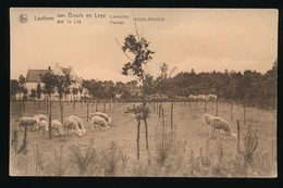 LAATHEM - HOOGLAATHEM - LATEM = AANBOSCH EN LEYE - LANDSCHAP - Sint-Martens-Latem