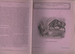 Couverture Illustrée De Cahier D'écolier : Encyclopédie De L'enfance N°75 Combat De Buffle Et De Tigre (PPP8225) - Animals