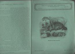 Couverture Illustrée De Cahier D'écolier : Encyclopédie De L'enfance N°20 Renard Guettant Sa Proie (PPP8227) - Animaux