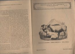 Couverture Illustrée De Cahier D'écolier : Encyclopédie De L'enfance N°66 Moutons Et Béliers Divers (PPP8228) - Animaux