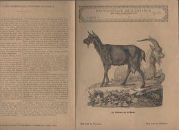 Couverture Illustrée De Cahier D'écolier : Encyclopédie De L'enfance N°65 La Chêvre Et Le Bouc  (PPP8229) - Animals