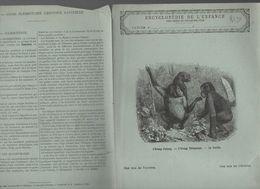 Couverture Illustrée De Cahier D'écolier : Encyclopédie De L'enfance N°2: L'orang Outang, L'orang Chimpanzé, Le Gorille - Animaux