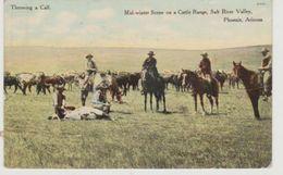 Etats - Unis Arizona Phoenix Mid-winter Scene On A Cattle Range. Salt River Valley. Throwing A Calf (cow-boy) - Phoenix