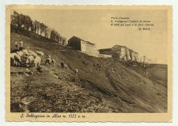 S.PELLEGRINO IN ALPE - VIAGGIATA FG - Lucca
