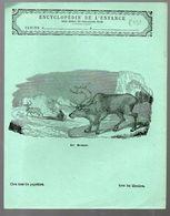 Couverture Illustrée De Cahier D'écolier : Encyclopédie De L'enfance N°59 Le Renne (PPP8231) - Animaux