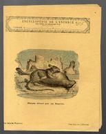 Couverture Illustrée De Cahier D'écolier : Encyclopédie De L'enfance N°25: Phoque Dévoré Par Un Dasyure (PPP8235) - Animals
