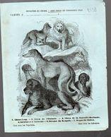 Couverture Illustrée De Cahier D'écolier : Encyclopédie De L'enfance N°16: Chiens Divers (PPP8238) - Animaux