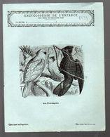 Couverture Illustrée De Cahier D'écolier : Encyclopédie De L'enfance N°93: Les Perroquets (PPP8239) - Animaux