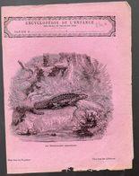 Couverture Illustrée De Cahier D'écolier : Encyclopédie De L'enfance N°116 La Salamandre Aquatique (PPP8240) - Animals