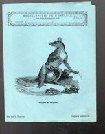 Couverture Illustrée De Cahier D'écolier : Encyclopédie De L'enfance N°32la Sarigue De Virginie (PPP8242) - Animaux