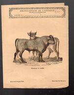 Couverture Illustrée De Cahier D'écolier : Encyclopédie De L'enfance N°67 Taureau Et Vache (PPP8244) - Animals