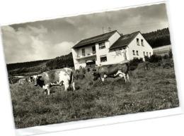 1 Ansichtkarte Gerolstein Mullenborn Pension Haus Waldfrieden - Gerolstein