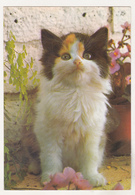 Germany Old Uncirculated Postcard - Cats - Chats