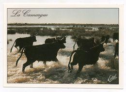 13 - La Camargue - (Taureaux) - Stieren