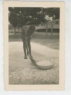 PHOTOGRAPHIES ORIGINALES - AFRIQUE NOIRE - CONGO - Portrait De Femme - Photo PAULEAU à POINTE NOIRE - Africa