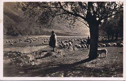 Shepherds In The Olt Valley - Viaggiata 1939 - Romania