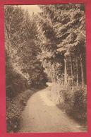 Habay-la-Neuve - Vieux Chemin De Bologne Vers La Trapperie ( Voir Verso ) - Habay